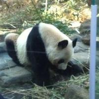 東京都恩賜上野動物園の写真