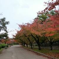 毛馬桜之宮公園の写真