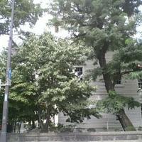 札幌市時計台の写真