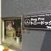 DogProトニードッグの写真