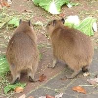 埼玉県こども動物自然公園の写真