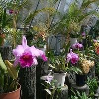 さいたま市園芸植物園の写真