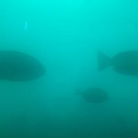 白浜海中展望塔(コーラルプリンセス)の写真
