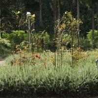 丹波市立薬草薬樹公園の写真