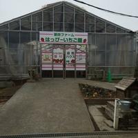 新井ファームはっぴーいちご園の写真