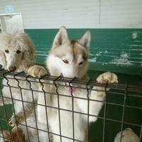 世界の名犬牧場の写真