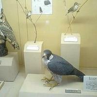 大阪南港野鳥園の写真