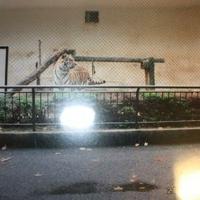 広島市安佐動物公園の写真