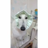 Dog care salon メリオンの写真