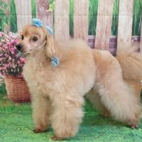 Loco Dog Salonの写真